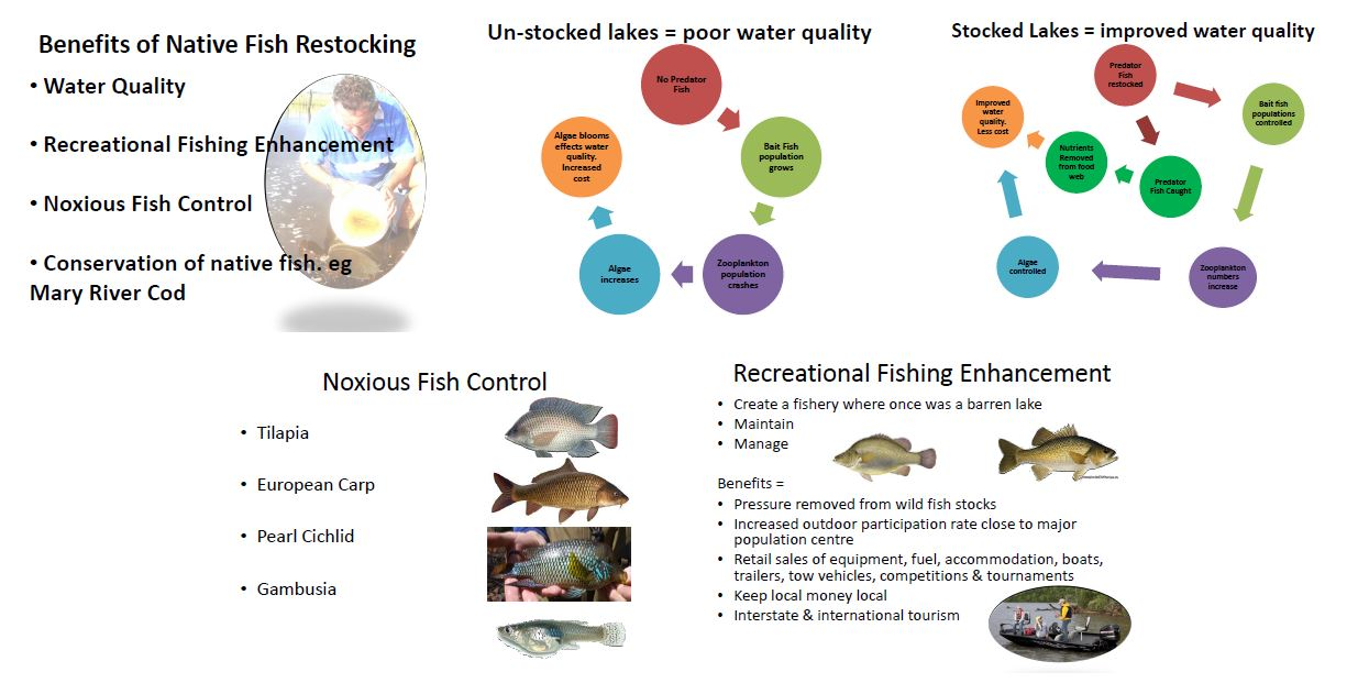 Native Fish Restocking, PRFMA, Pine Rivers Fish Management Association